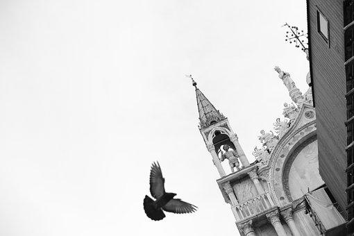Venice, Venedig, Pigeons, Pigeon, Markusplatz, Venetian