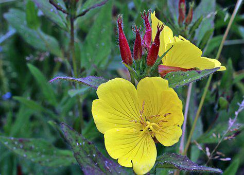 Summer, Flowers, Yellow, Garden, Nature