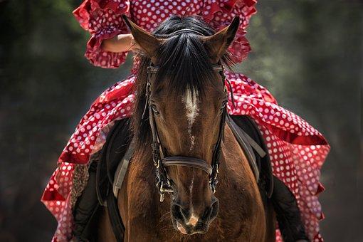 Horse, Horse Show, Horse Head, Horseback Riding, Animal