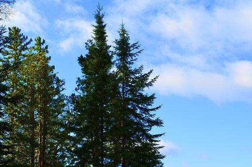 Trees, Skyline, Green, Blue, Lake, Nature, Summer, Fall