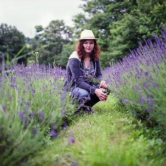 Lavender, Picking, Girl, Nature, Summer, Flower