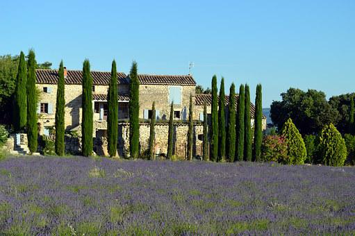 Landscape, Provence, Lavender, France, Nature, Fields