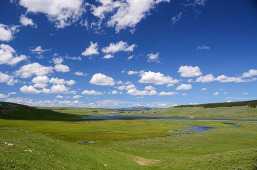 Hayden Valley, Yellowstone, Valley, Landscape, Green