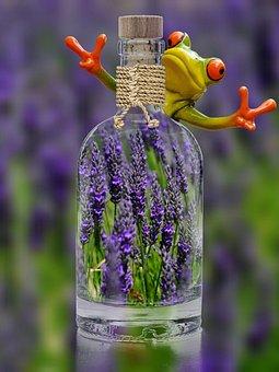 Lavender, Bottle, Frog, Funny, Plant, Spring, Purple