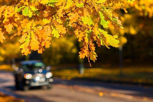 Autumn, Leaves, Oak, Oak Leaves, Car, Fall, Road