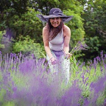 Lavender, Picking, Woman, Nature, Summer, Flower
