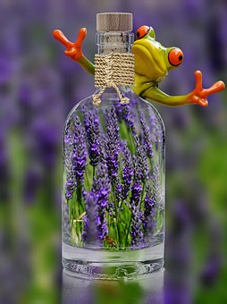Lavender, Bottle, Frog, Funny, Plant, Spring, Purple