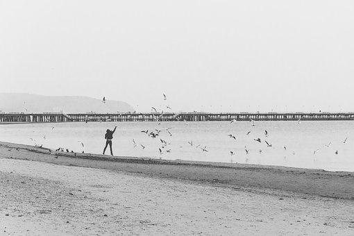Shore, Man, Birds, Feeding, Jumping, Pier, Boardwalk