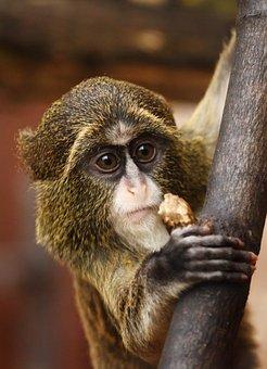 Monkey, Animal, Zoo, Mammal, Primate, Young, Wildlife