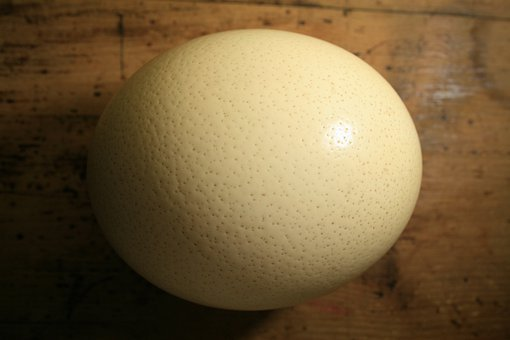 Ostrich Egg, Shell, Egg, Ostrich, Buff, Dimpled, Strong