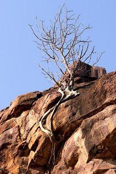 Rock, Tree, Than Life Artist, Nature, Drought