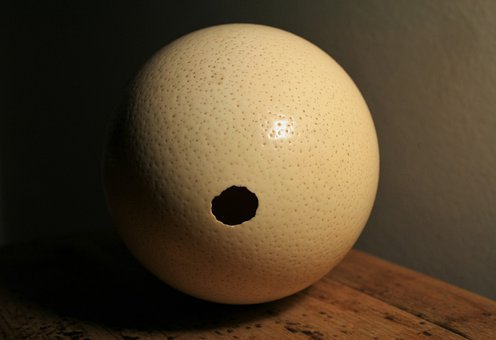 Ostrich, Egg, Shell, Hole, Empty, Container