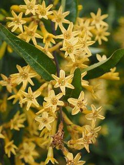 Flowers, Yellow, Bush, Blue-green Tobacco
