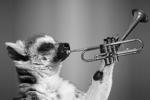 Lemur, Ring-tailed, Wildlife, Zoo, Cute, Rainforest