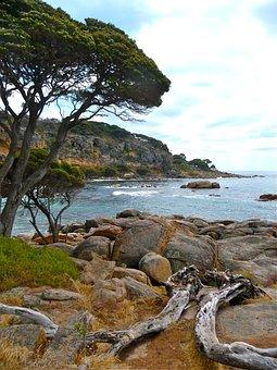 Driftwood, Beach, Coast, Water, Nature, Ocean