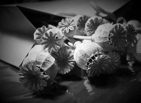 Pods, Seed, Poppy, Dry, Bleached, Detail, Black White