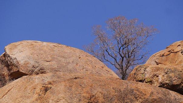 Botswana, Rock, Tree, Than Life Artist, Nature