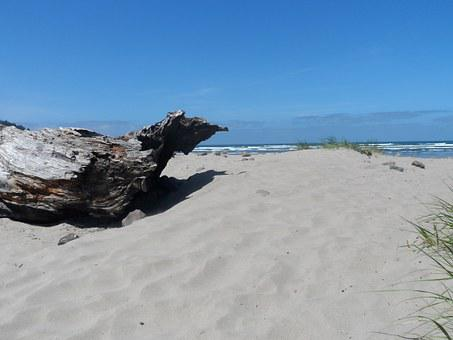 Beach, Driftwood, Ocean View, Sand, Log, Shore, Scenery