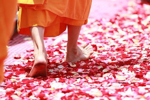 Monk, Walking, Rose Petals, Buddhism, Thailand
