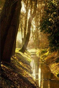 Side Light, Sunlight, Bach, River, Forest, Golden