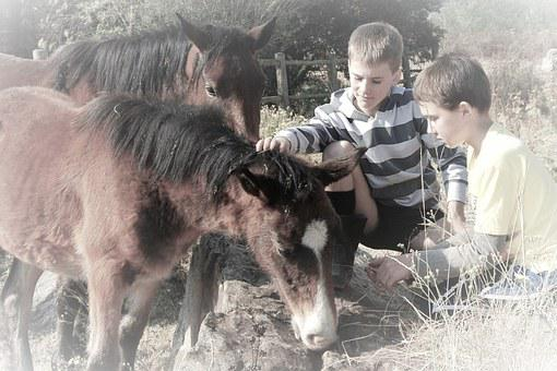 Boys, Outside, Animal, Fun, Young, Child, Outdoors