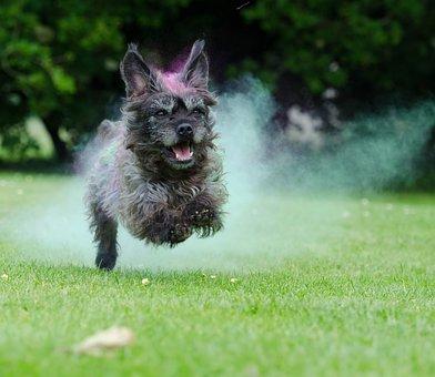 Holi Colour, Corn Powder Color, Colorful, Dog, Hybrid