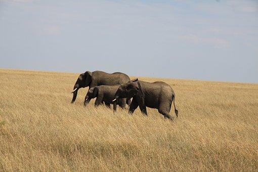 Elephant, Family, Africa, Kenya, Elephant Calf