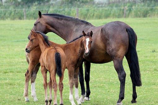Foal, Horses, Animal, Pasture, Mammal, Young Animal