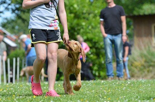 Dog School, Hunting Dog, Hungarian Pointing Dog, Dog
