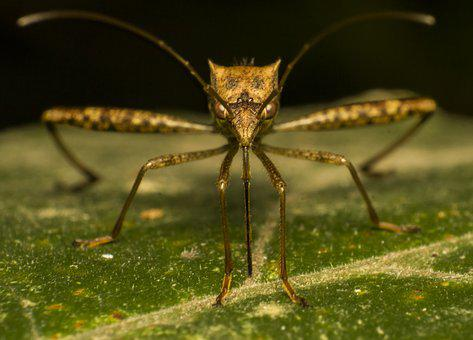 Mosquito, Bug, Nature, Insect, Macro