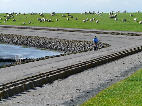 Dike, Dike Road, North Sea, Nordfriesland, Sheep, Grass