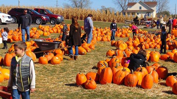 Pumpkin, Pumpkin Patch, People, Halloween, Farm, Patch