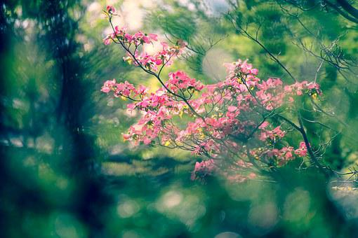 Landscape, Natural, Flowers, Arboretum, Plant, Japan