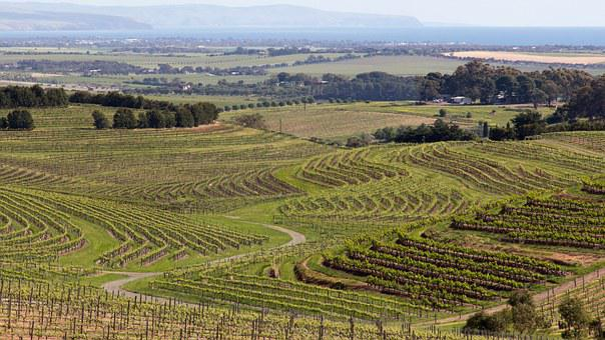 Wine, Mclaren Vale, Australia, Country, Rural, Valley
