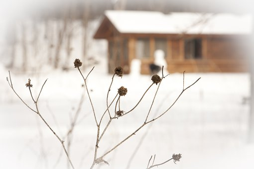 Winter, Plants, Dried, Branches, Buds, Yards, Gardens