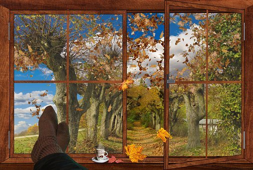 Autumn, Window, Fall Foliage, Leaves, Outlook, Rest