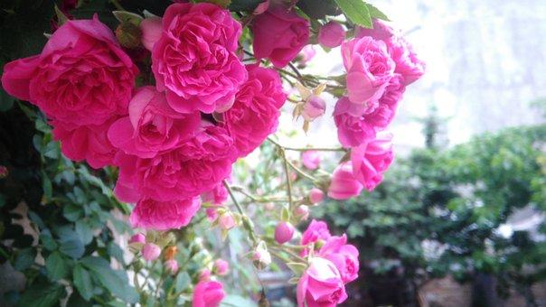 Flowers, Spring, Nature, Garden, خاروانا, Kharvana
