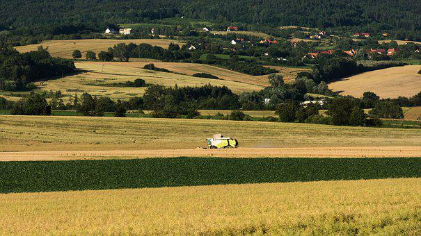 Field, Harvest, Agriculture, Summer, Landscape, Corn