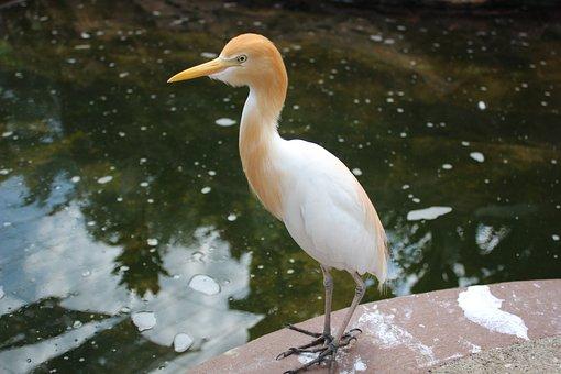 Bird, Stork, Milky Stork, Swan, Nest, Feather, Nature