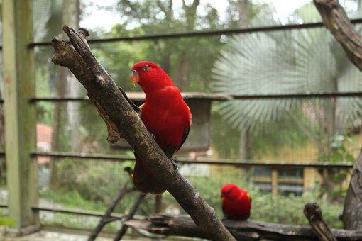 Kl Bird Park, Bird, Parrot, Feather, Animal, Colorful