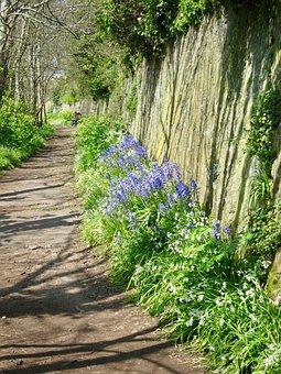 Walk, Nature, Blue Bells, Path, Journey