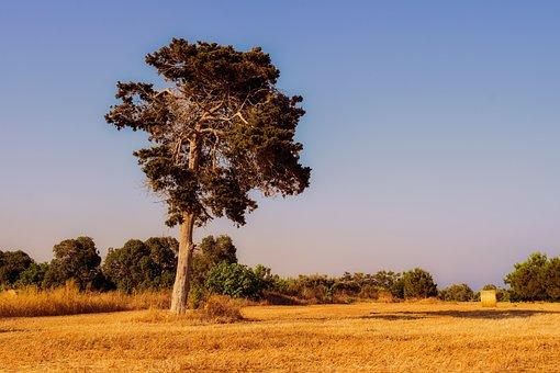 Tree, Field, Landscape, Grass, Summer