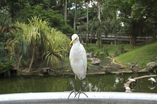 Bird, Egret, Animal, Wings, Flight