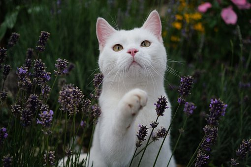 Cat, Garden, Outdoor, Animal, British Shorthair, Nature