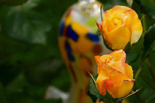 Roses, Blossom, Bloom, Yellow, Beauty