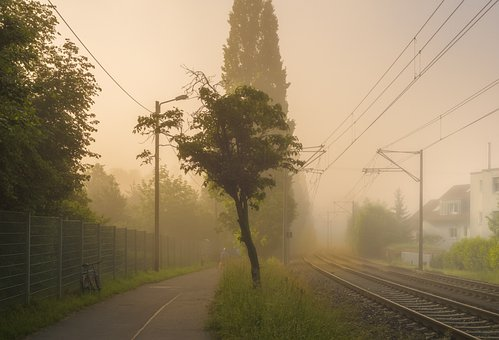 Tree, Fog, Morning Mist, Rails, Power Lines, Nature