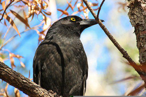 Crow, Bird, Raven, Animal, Black, Feather, Wildlife