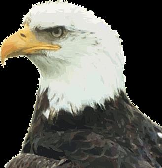 Bald Eagle, Eagle, Bird Of Jove, Bird Of Prey, Raptor