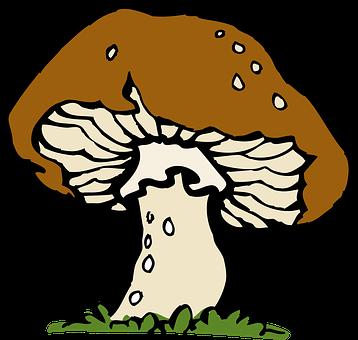 Mushroom, Big, Fungus, Brown