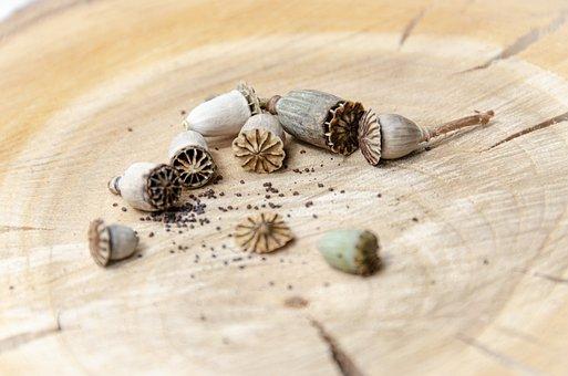 Poppy, Seeds, Capsule, Poppy Seeds, Seed, Sowing
